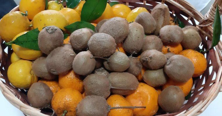 Zgjidhni Burimet Natyrale të Vitaminës C – Receta